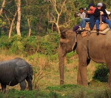 Chitwan Jungle Safari